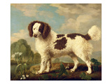 Brown and White Norfolk or Water Spaniel  1778 (Oil on Panel)