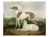 Two Greyhounds in a Landscape