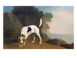 Foxhound on the Scent  C1760 (Oil on Paper Laid on Board)