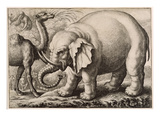 An Elephant and a Camel  Engraved by Wenceslaus Hollar (1607-77) 1663 (Etching)