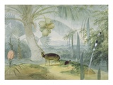 A Landscape in Ceylon  with Barking Deer and Fawn and a Pair of Paradise Fly-Catchers  C1808-11