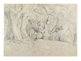 Ancient Trees  Lullingstone Park  1828 (Graphite on Paper)
