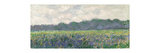 Field of Yellow Irises at Giverny  1887 (Oil on Canvas)