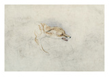 Study of a Crouching Fox  Facing Right Verso: Faint Sketch of Fox's Head and Tail