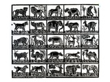 Collection of Animals (Woodcut)
