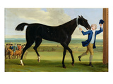 The Duke of Rutland's 'Bonny Black'  c1720