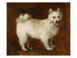 Spitz Dog  c1760-70