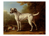 Grey Spotted Hound  1738 (Oil on Canvas)