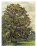 Study of an Ash Tree  C1851 (Oil on Paper on Panel)