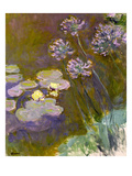 Waterlilies and Agapanthus  1914-17 (See Detail 414400) (Oil on Canvas)