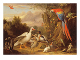 A Macaw  Ducks  Parrots and Other Birds in a Landscape  c1708-10