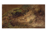Undergrowth  C1821 (Oil on Paper on Board)