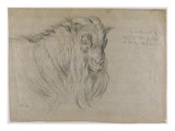 Study of the Head of a Ram (Black  Sanguine and White Chalk on Grey Paper)