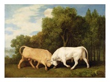 Bulls Fighting  1786 (Oil on Panel)