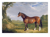 A Clydesdale Stallion  1820 (Oil on Canvas)
