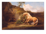A Horse Frightened by a Lion  c1790-5