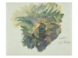 A Study of Ferns  Citivella  1842  (Oil on Gray Wove Paper)