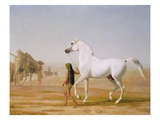 The Wellesley Grey Arabian Led Through the Desert  C1810 (Oil on Canvas)
