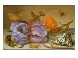 Still Life Depicting Flowers  Shells and Insects (Oil on Copper) (For Pair See 251378)