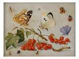 A Still Life with Sprig of Redcurrants  Butterflies  Beetles  Caterpillar and Insects