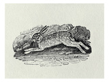 The Hare from 'History of British Birds and Quadrupeds' (Engraving)