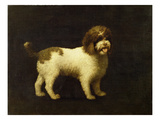 A Water Spaniel  1769 (Oil on Canvas)