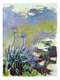 The Agapanthus  1914-17 (Oil on Canvas)
