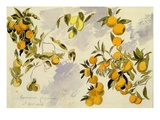Orange Trees  1863 (W/C  Pen and Ink over Graphite on Heavy Wove Paper)