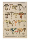 Good and Bad Mushrooms  Illustration from the Illustrated Supplement of Le Petit Journal