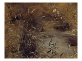 Rushes by a Pool  C1821 (Oil on Paper on Board)