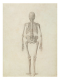 A Comparative Anatomical Exposition of the Structure of the Human Body with That of Tiger and Fowl