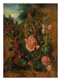 Study of Hollyhocks  C1826 (Oil on Board)