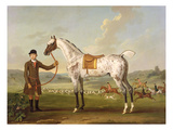 Scipio  Colonel Roche&#39;s Spotted Hunter  C1750 (Oil on Canvas)