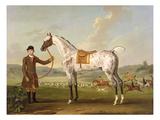 Scipio  Colonel Roche's Spotted Hunter  c1750