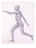 The Human Figure  Lateral View