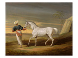 Signal  a Grey Arab  with a Groom in the Desert (Oil on Panel)
