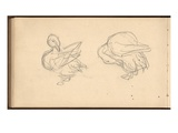 Two Ducks Preening their Feathers (Pencil on Paper)