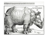 The Rhinoceros  1515 (Woodcut)