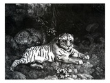 Two Tigers  1788 (Engraving)