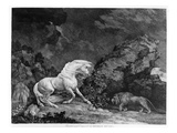 A Horse Affrighted by a Lion  Engraved by the Artist  1777 (Etching)