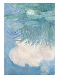 Waterlilies  Detail  1914-17