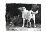 Dog  1788 (Engraving)
