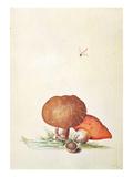 Cep Mushroom with Damsel Dragonfly