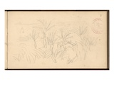 Hut in the Palm Trees at the Moreno Garden  C1884 (Pencil on Paper)