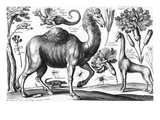 Animalium  Ferarum Et Bestiarum  Engraved by David Loggan  1663 (Engraving)