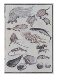 Undersea Creatures  from a Manga (Colour Woodblock Print)