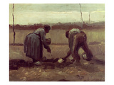 Two Peasants Planting Potatoes  1885 (Oil on Canvas)