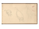 Study of Turkeys (Pencil on Paper)