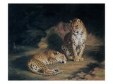 A Pair of Leopards  1845 (Oil on Canvas)