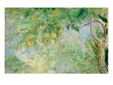 Orange Tree Branches  1889 (Oil on Canvas)